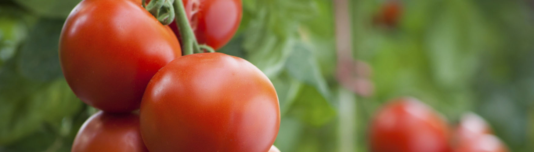 Nutrição Vegetal